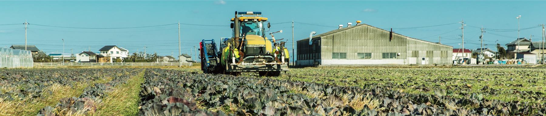 農作物たち