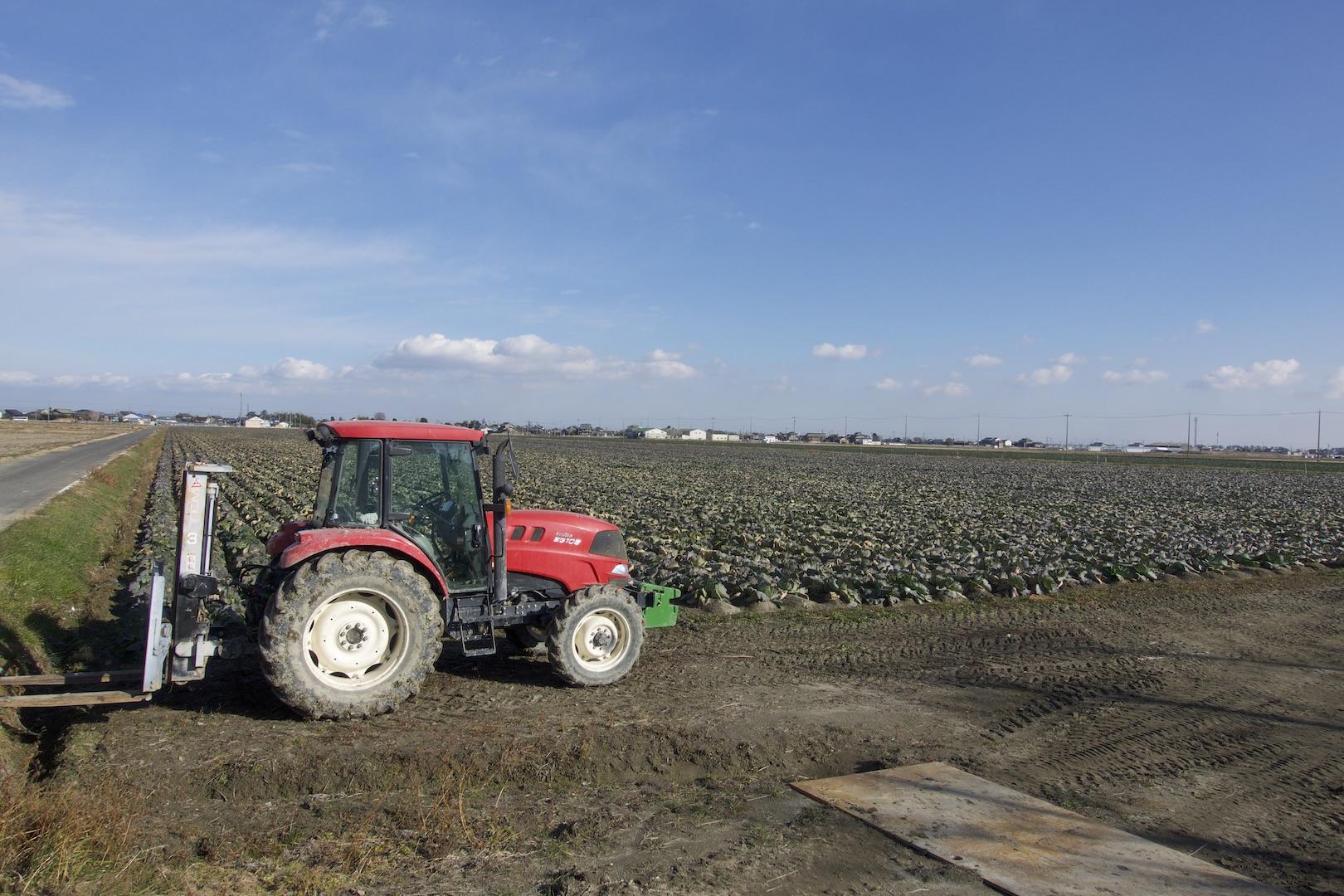 収穫準備が始まりました。