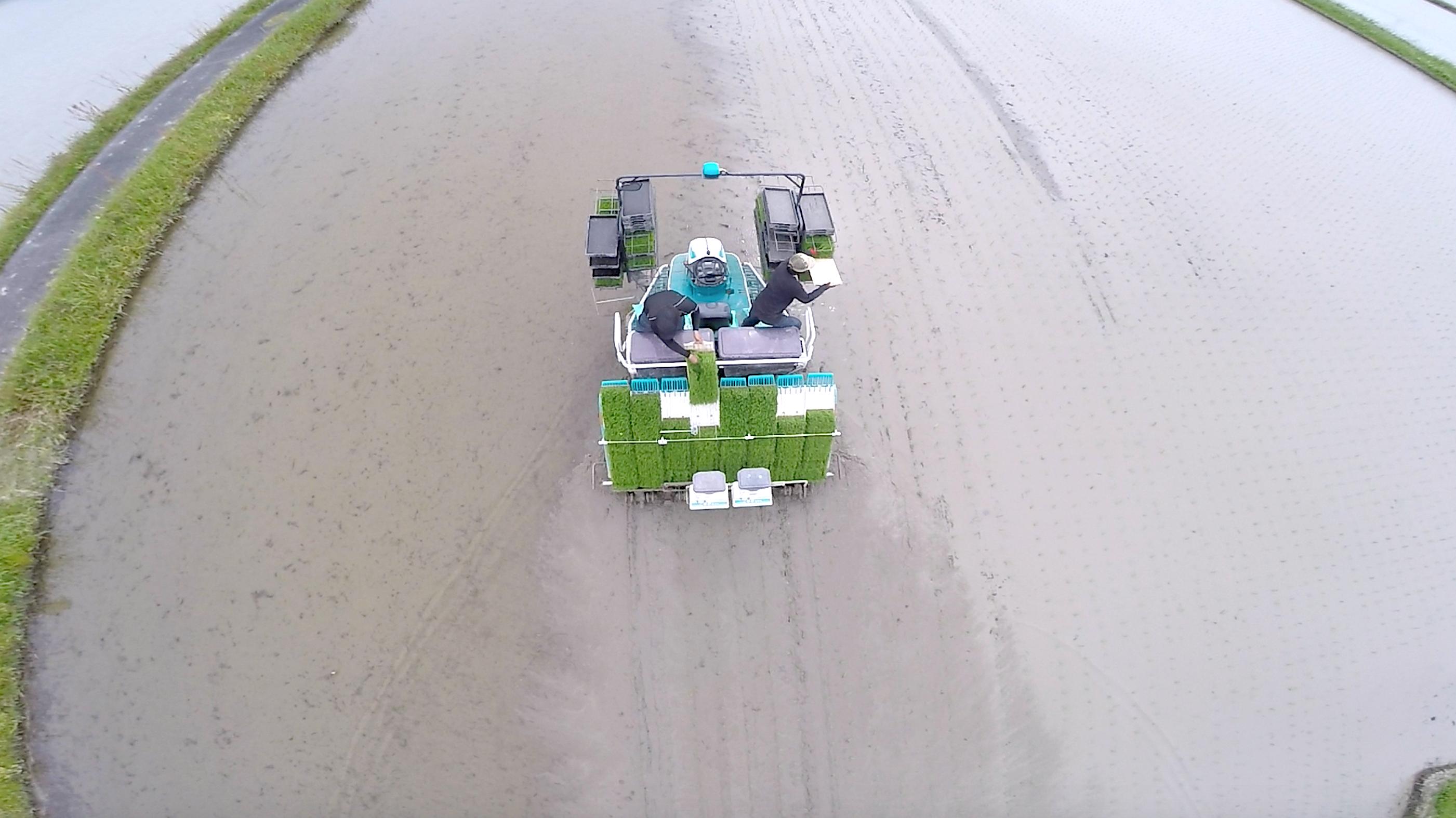 自動運転田植え機による田植え作業