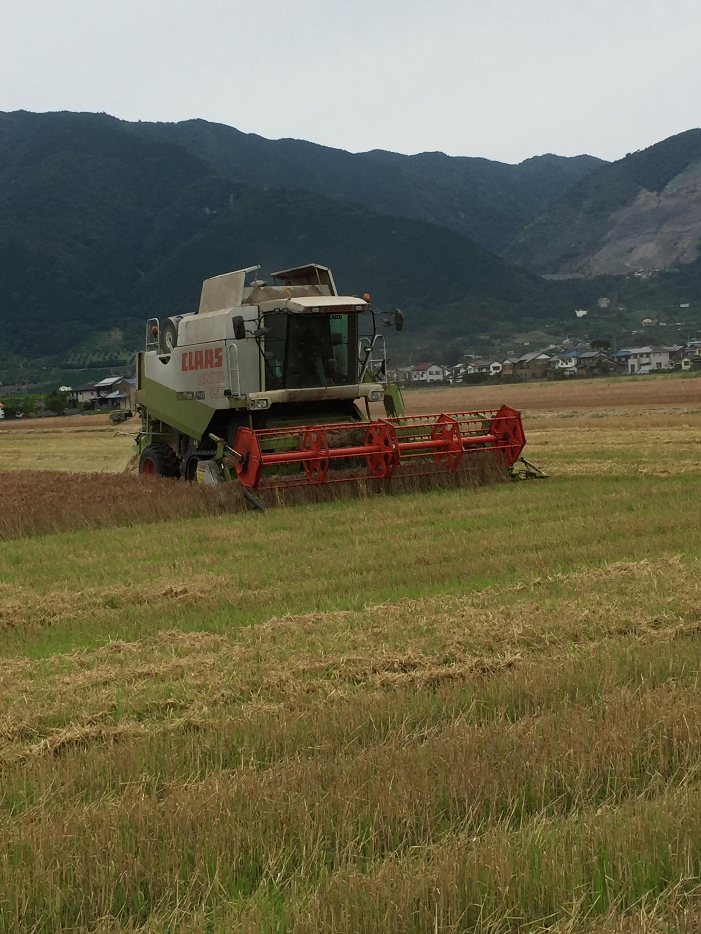 2018産の小麦収穫が終了しました。